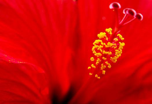 Sex Blumen #9