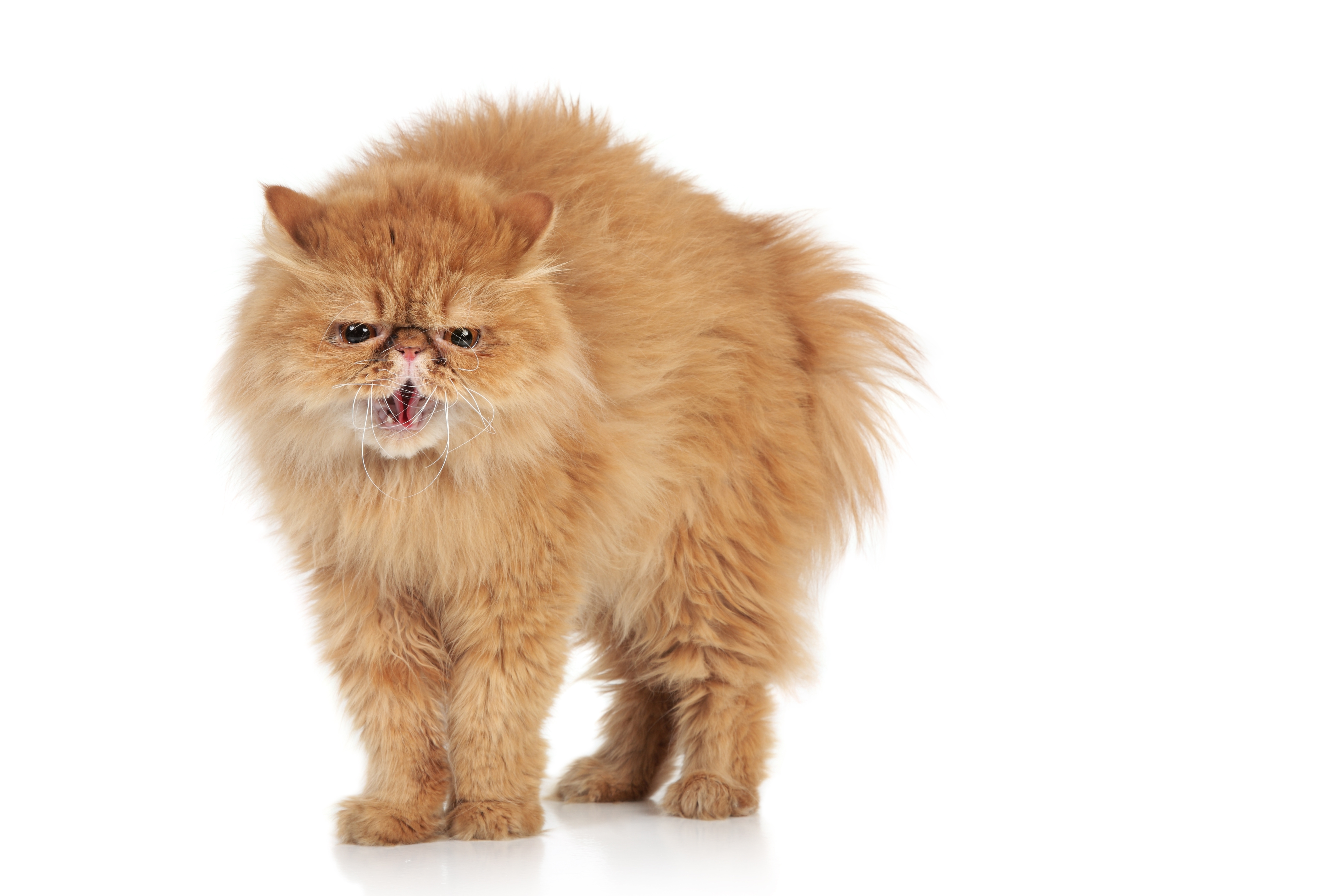 How To Keep An Indoor Cat At A Healthy Weight