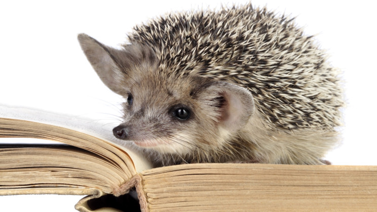 16 Fuzzy Little Facts About Hedgehogs Alltop Viral