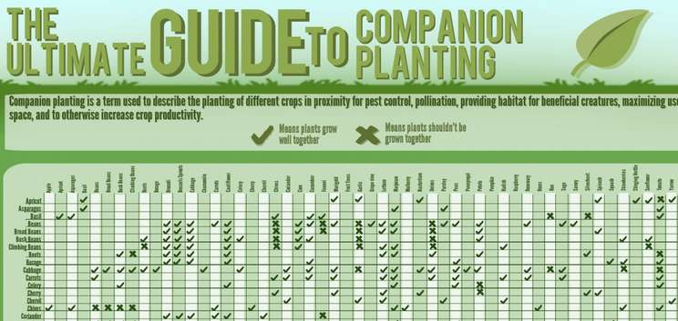 The Ultimate Guide To Companion Planting [infographic]