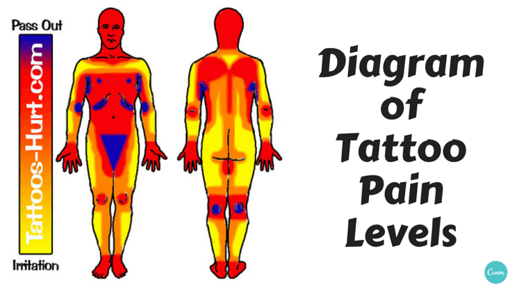 Diagram of tattoo pain hotspots chart alltop viral for Stomach tattoo pain level