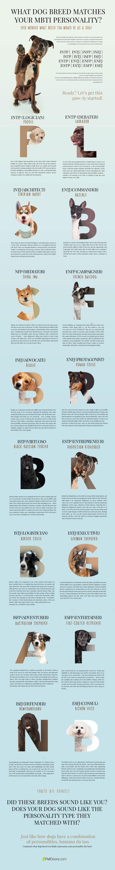 Dog Breed Personality Test Buzzfeed