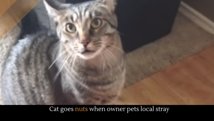Cat goes nuts when owner pets local stray alltop viral unlike dogs which are amazing cats dont easily give away their love it takes awhile to earn a cats loyalty and once you get it you get it publicscrutiny Image collections